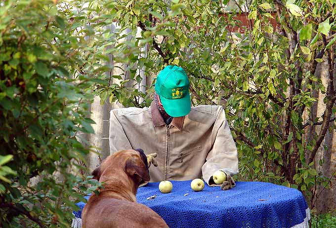 strange scarecrow in Russian garden 4