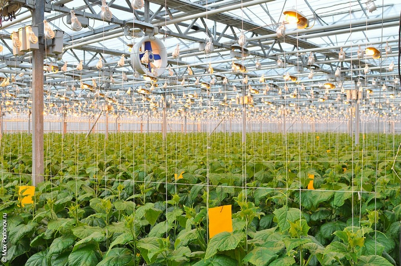 False Summer In the Agricultural Plant