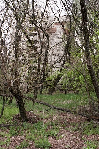 Unknown Consequences of the Chernobyl Disaster