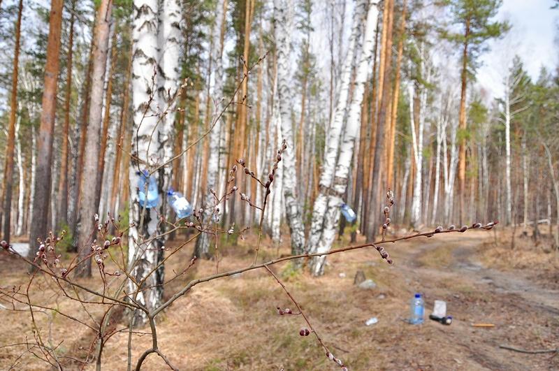 Against All Diseases: The Birch Sap