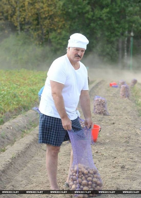 Belarus President Harvests Potatoes