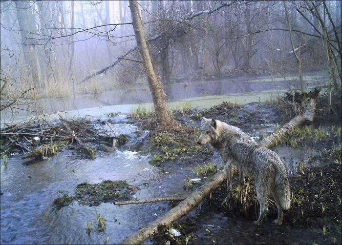 Chernobyl 30 Years Later