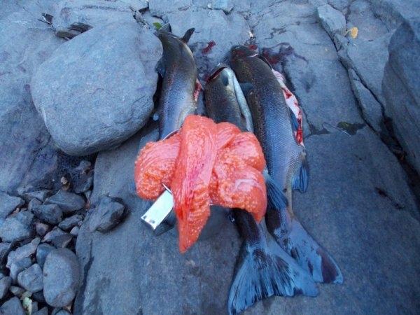 Fourteen Days in Taiga of Kola Peninsula