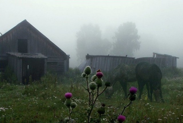 Photos from Russian Countryside