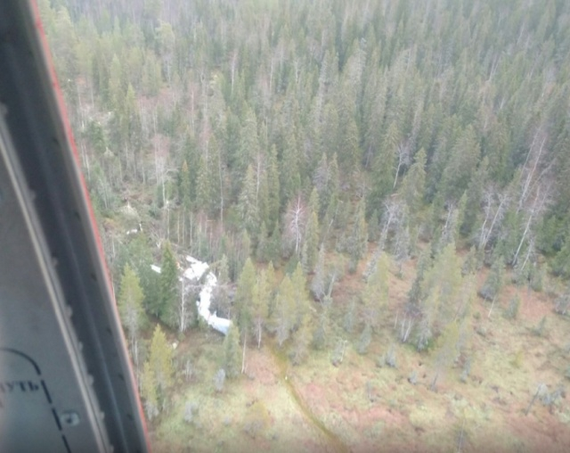 People Fall in Plane to Forest