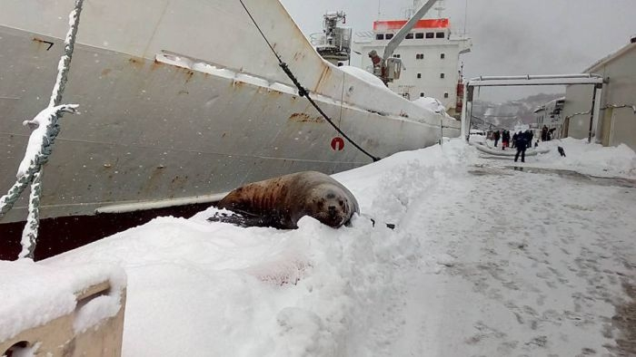 Seal Got into a Port to Steal Some Fish, Sailors Feed Him