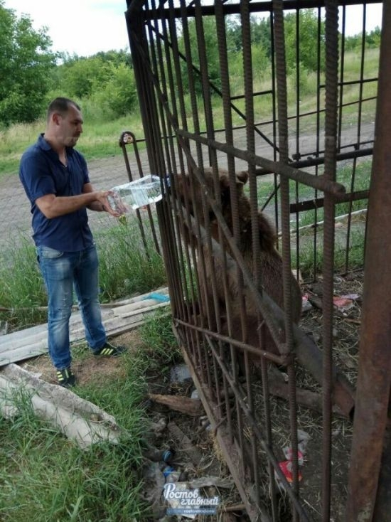 Neglected Animals Starving to Death in Russian Zoo
