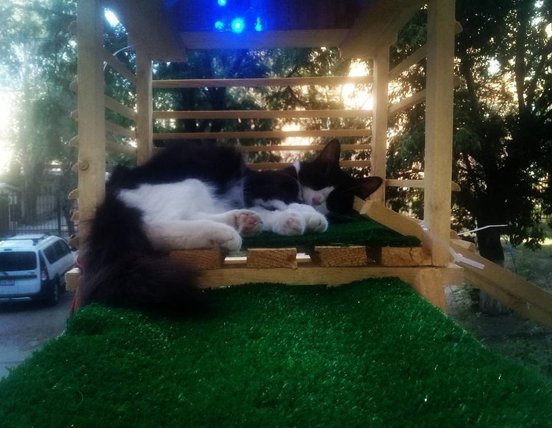Man Made a Separate Entrance for His Cat that Glows in the Dark