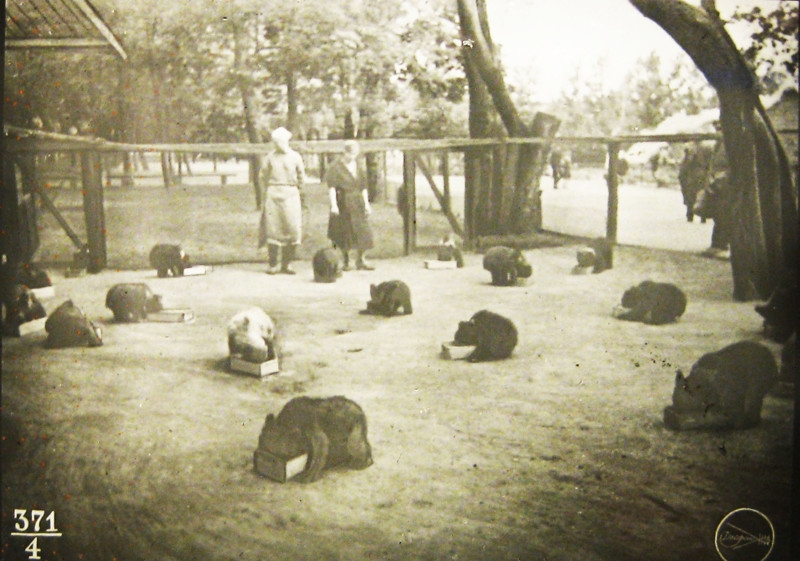 Moscow zoo in early 20th century: Red Army in the Zoo, Zoo During Flood and more