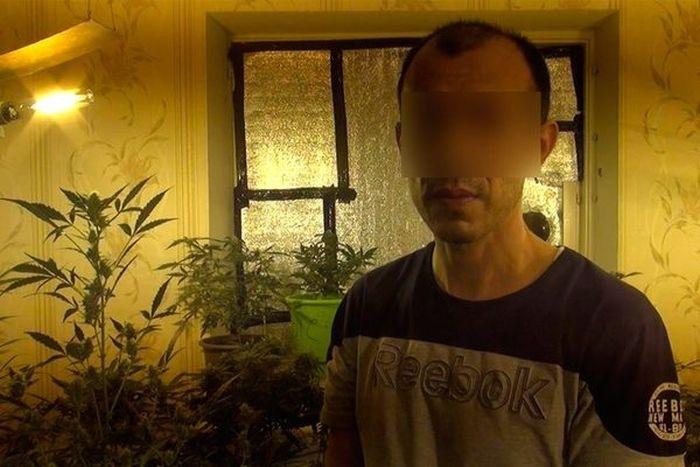Indoor Marijuana Growers in Samara, Russia
