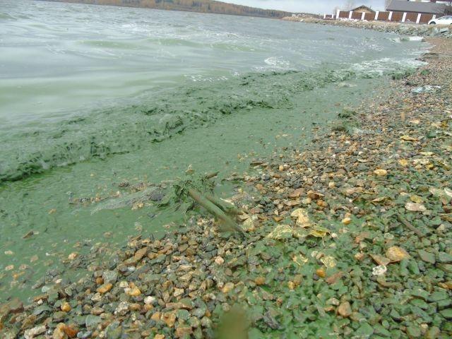 Russian Lake Turned Green