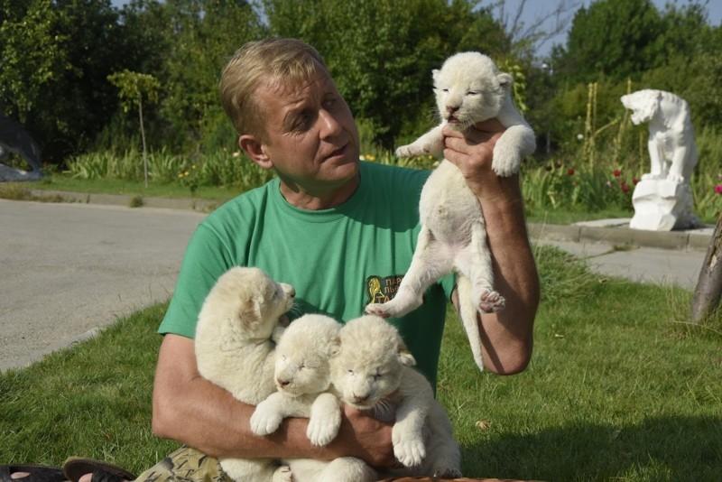 Unique White Tiger Cubs Were Born in Crimea