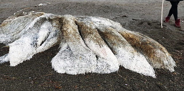 New Hairy Weird Monster Washed On the Shore [photo and video]