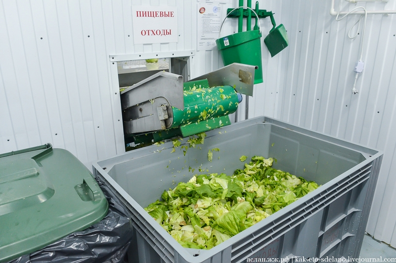 Washing Lettuce and Cutting Salads