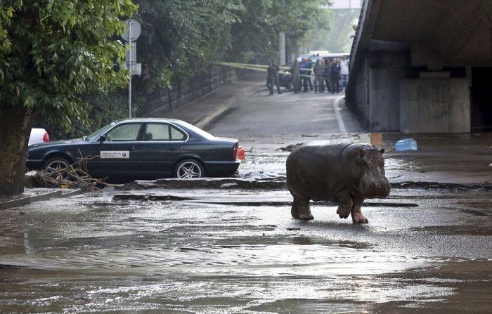 Jumanji on streets of Tbilisi