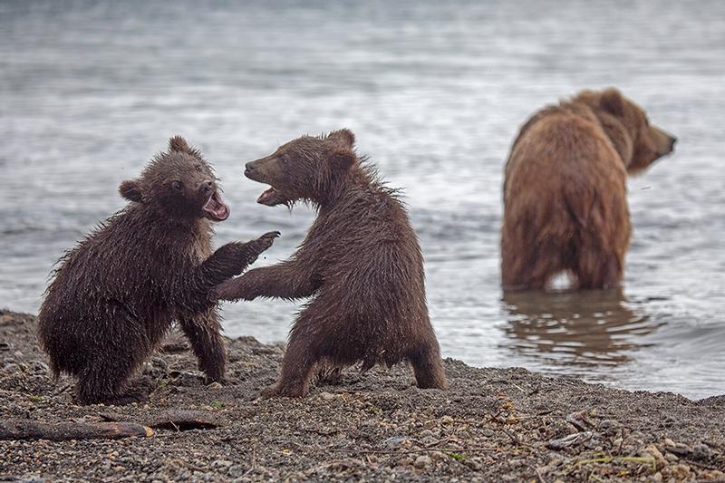 Kurill Lake is a Village of Wild Bears