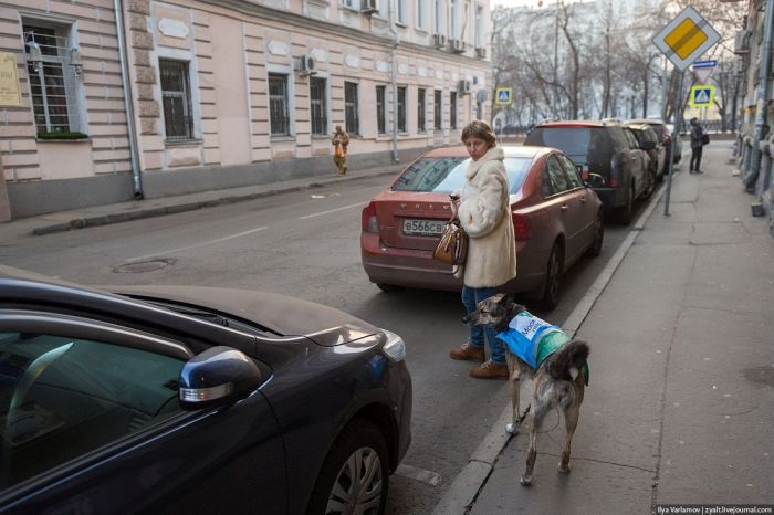 Moscow Police Hires Ten Dogs to Fight Parking Violators
