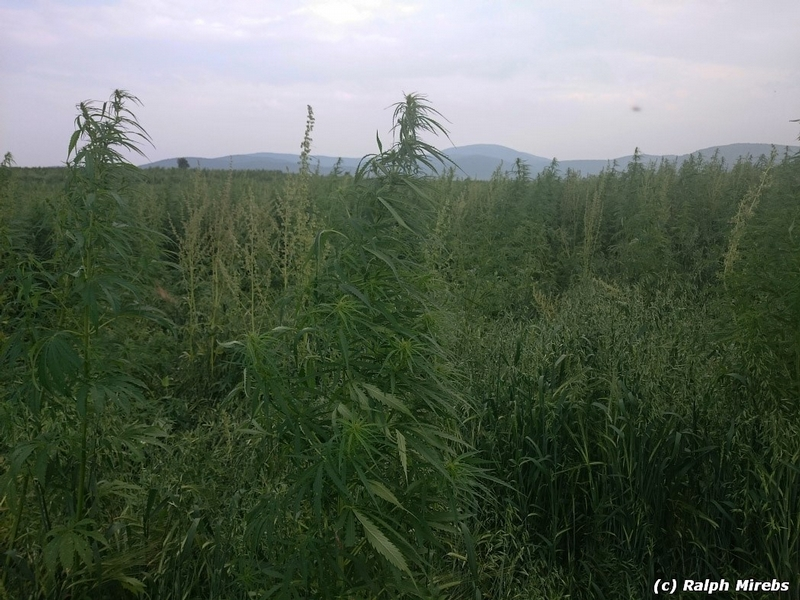 Russia: Grass and Missiles