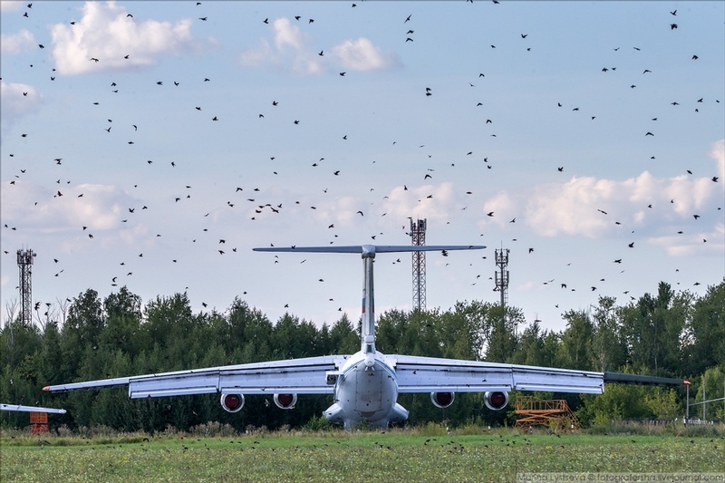 This Military Airfield is Raid by Birds, Hundreds of them are Here