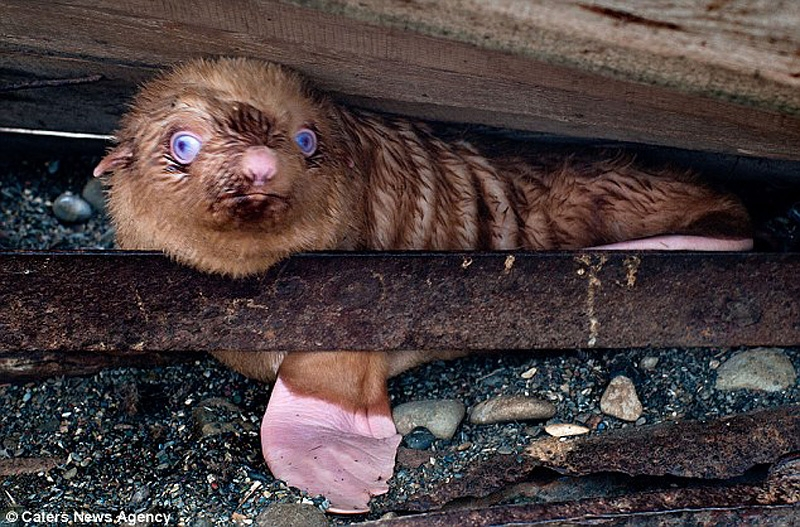 The Seal Pup Rejected By Its Own Family