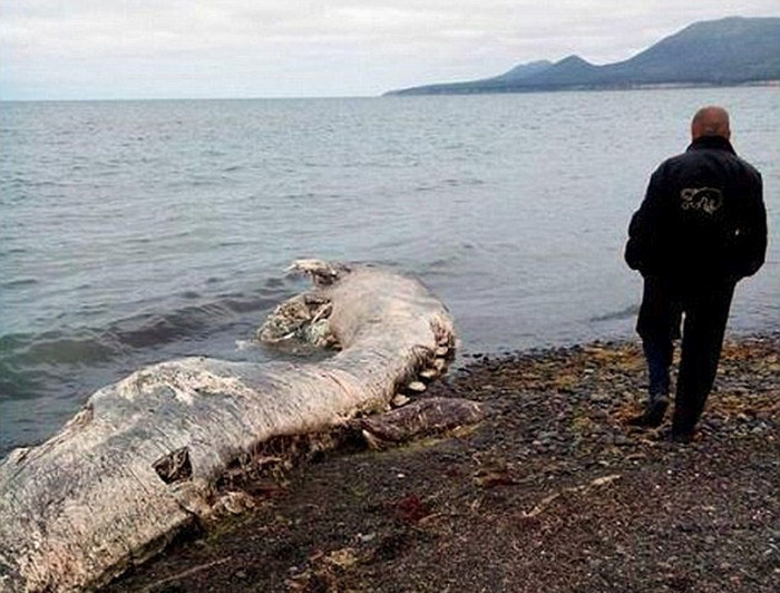 Remains of Unidentified Monster Have Been Found in Russia Again