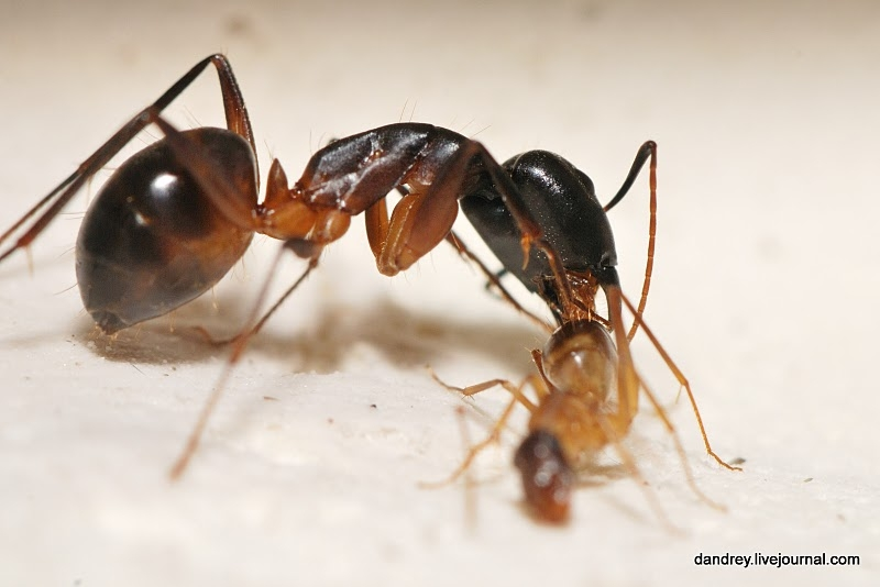 Ants At Home!