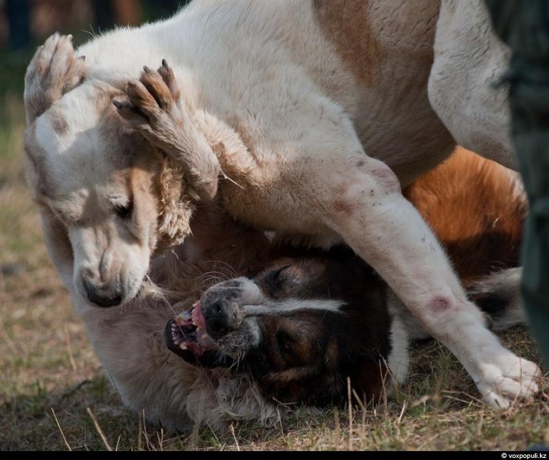 Cruel Dog Games