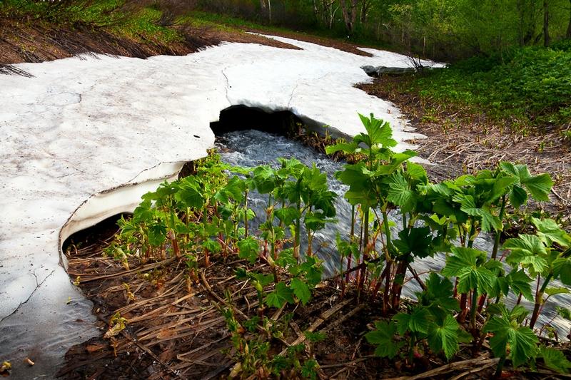 Hot Springs Of Kamchatka