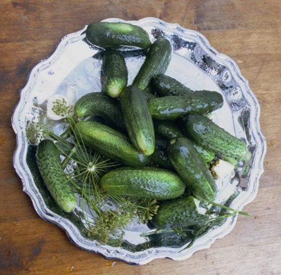 Laud Cucumbers To The Skies