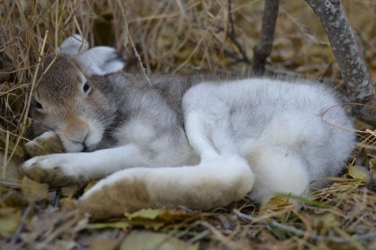 The Last Fall. A Sad Story About One Hare