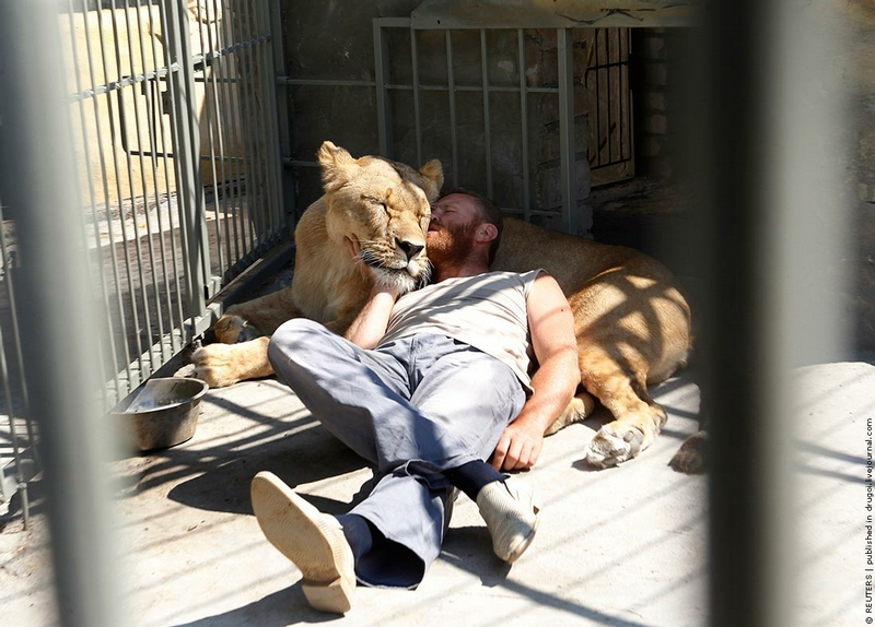 In Cage With a Lioness