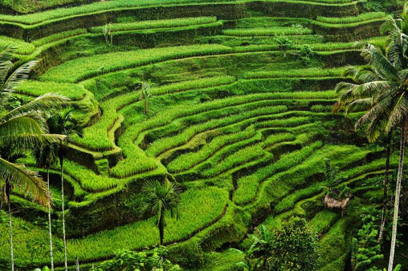 Paradise Terraces of Bali 1