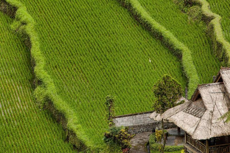 Paradise Terraces of Bali 16