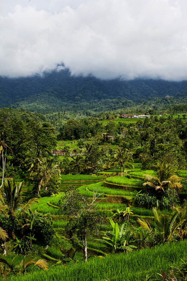 Paradise Terraces of Bali 6