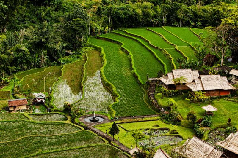 Paradise Terraces of Bali 8