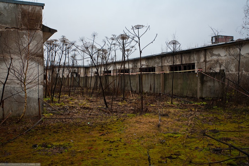 Russian abandoned pig city 17