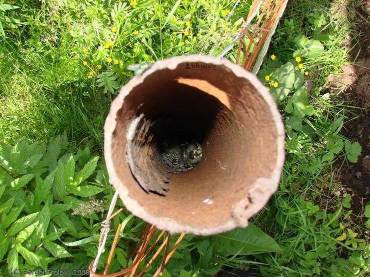 russian bird's nest 3