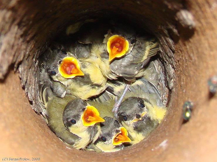 russian bird's nest 6