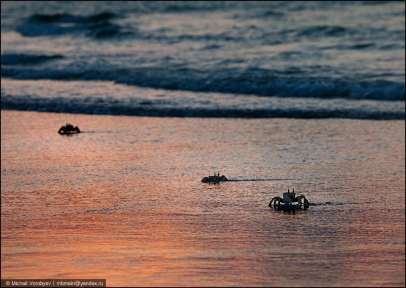 Qalansiya Beach 17