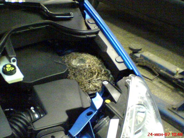birds nest under the car hood 1