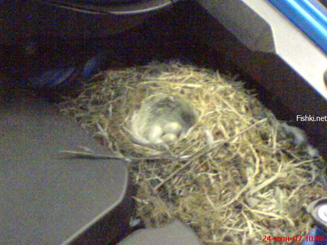 birds nest under the car hood 2