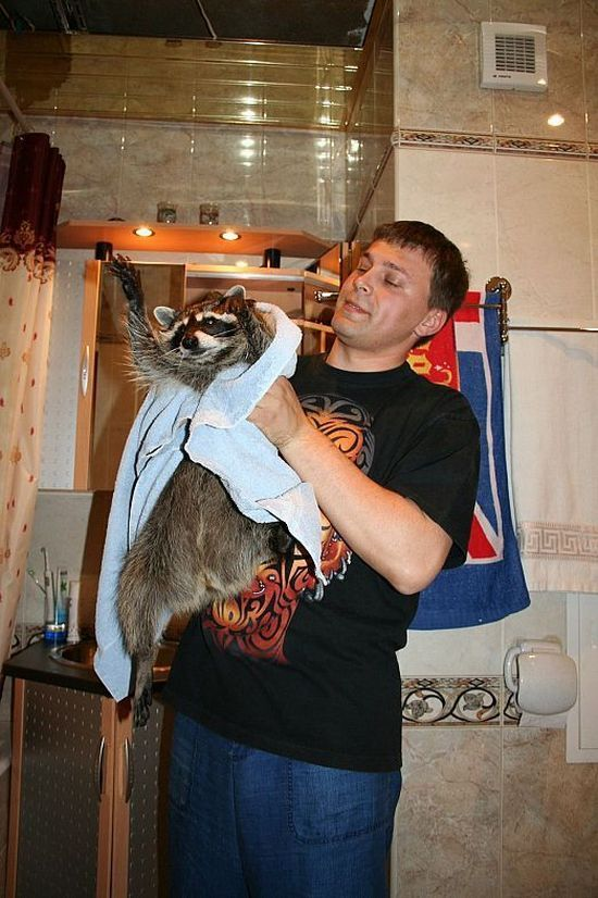 Russian racoon pet 7