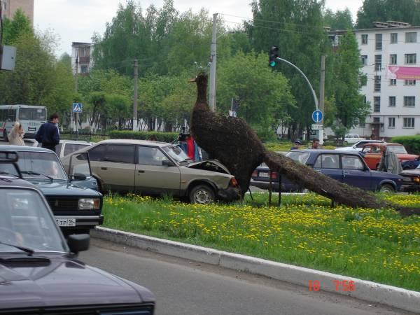 a car rode into a bird 1