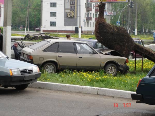 a car rode into a bird 2