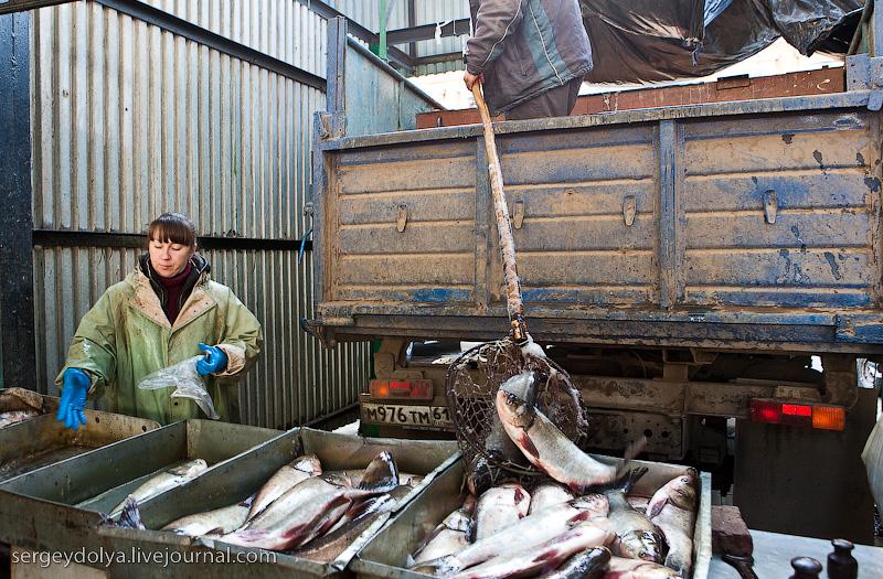 Russian city Rostov, fish market there 6