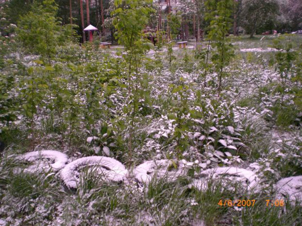 Snow in Summer in Russia 15
