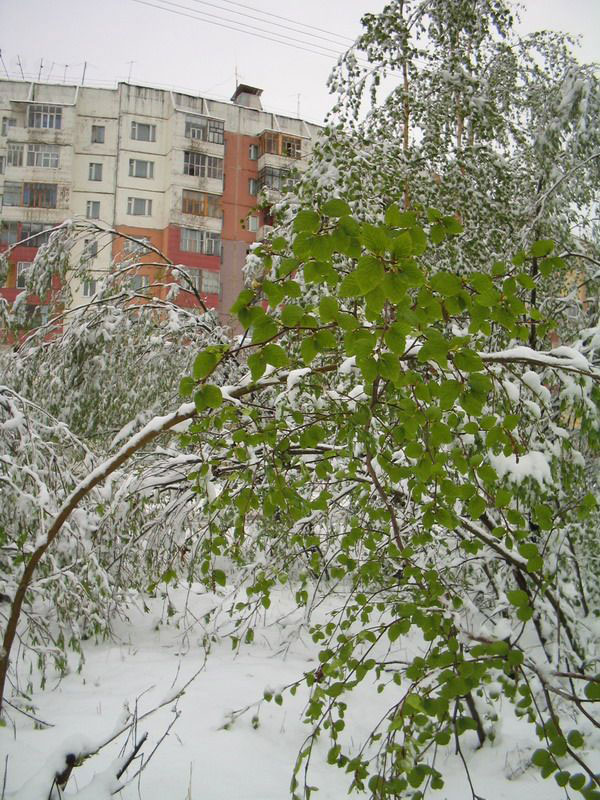 Snow in Summer in Russia 7