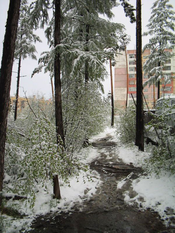 Snow in Summer in Russia 9