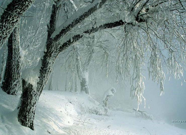 Russian nature in winter 32