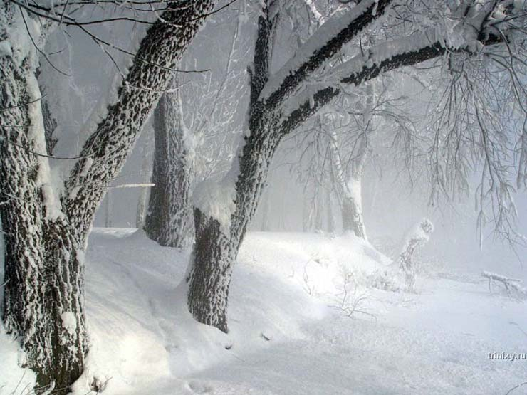 Russian nature in winter 9
